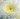 Crisantemo – Apulia Plants