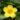 Gelsemium – apulia plants
