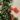 Punica Granatum – Apulia Plants
