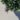 Lavandula – Apulia Plants