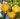 Lemon – Apulia Plants