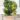 calamondino – apulia plants