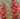 Penstemon – Apulia Plants